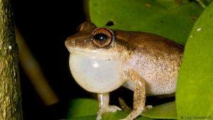 160512160011_frog